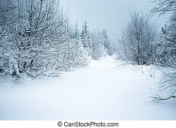 forest path under the snow
