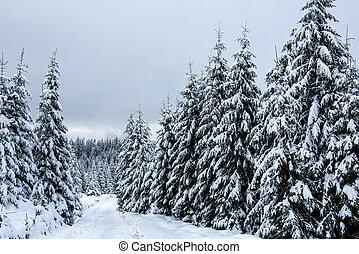 landscape, winter bomen, sneeuw