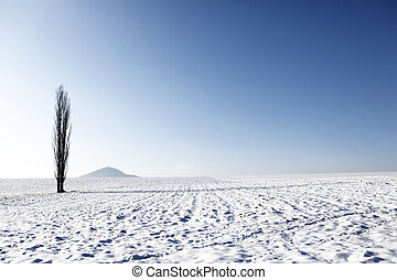Landscape - Winter landscape with high tree alone