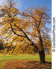 chestnut in an autumn park