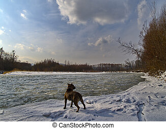 Landscape with a dog on the bank of winter river