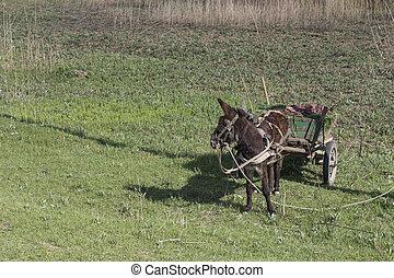 Landscape with a donkey.