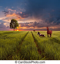 Landscape with a green field, road and horses - Evening...