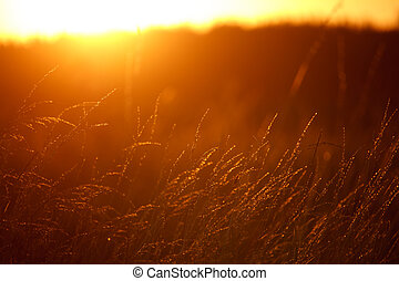 Landscape with a meadow of grass against the backdrop of a sunset, bright orange sun