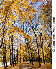 path in sunny autumn park