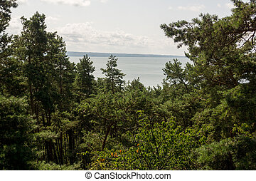 sea seen from above the trees