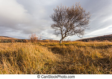 Landscape with a tree. Autumn Iceland