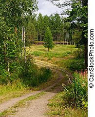 a winding dirt road through the forest