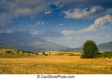 landscape with a yellow fields  at sunset