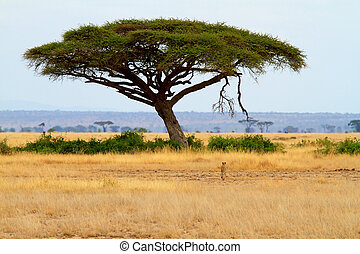 landscape with Acacia tree and cheetah