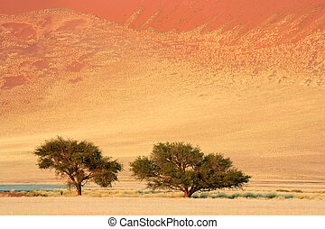 African Acacia trees - Landscape with African Acacia trees...