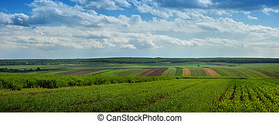 landscape with agricultural crops a nd cloiudly sky