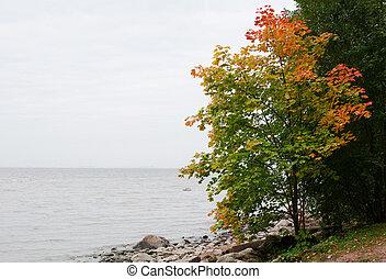 Landscape with an autumn maple