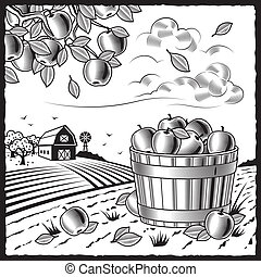 Retro landscape with apple harvest in woodcut style. Black and white vector illustration with clipping mask.