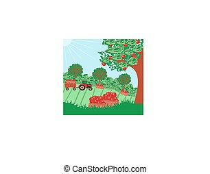 landscape with apple trees and man driving a tractor with a trailer