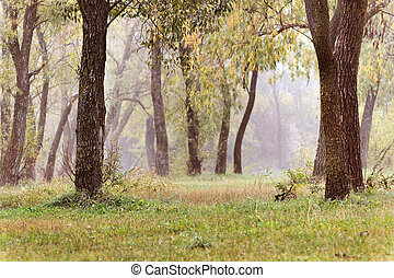Landscape with autumn and spring foggy morning in the forest. Yellow orange leaves. Copy space