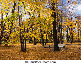 benches in a sunny autumn park
