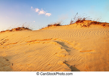 Landscape with blue sky and dunes. Sunset on the dunes. Beautifu