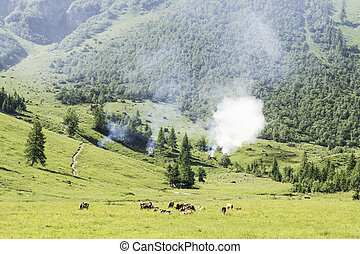 Landscape with cows and wild fire - Picture of a landscape...