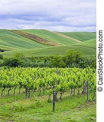 landscape with cultivated fields and vineyard