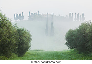 Landscape with cypress alley in Tuscany, Italy