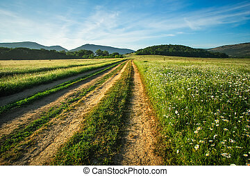 Landscape with dirt road between meadow in the spring. Agricultural, fields and mountain.