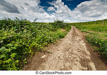 Landscape with dirt road