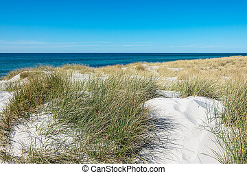 Landscape with dune on the Baltic Sea coast in Germany