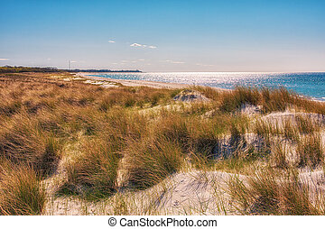 Landscape with dunes on the Baltic Sea coast in Germany