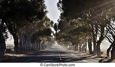 Eucalyptus Avenue - Landscape with Eucalyptus Avenue in...