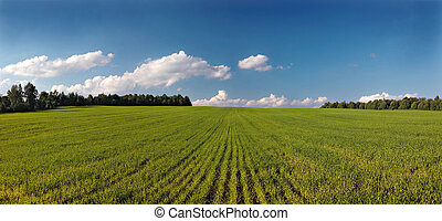 Landscape with field. Panorama.