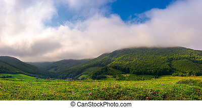 landscape with fields and forest on hillside. lovely foggy...