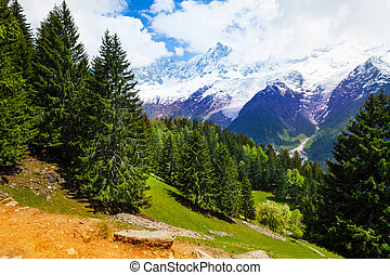 Landscape with fir-trees near Mont Blanc, Alps