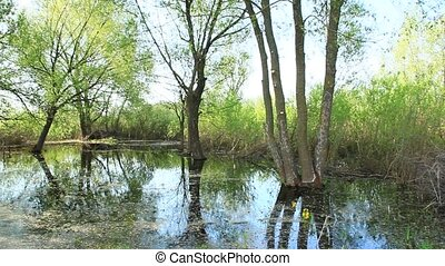 Landscape with flooding in marshland in spring. Spring view....