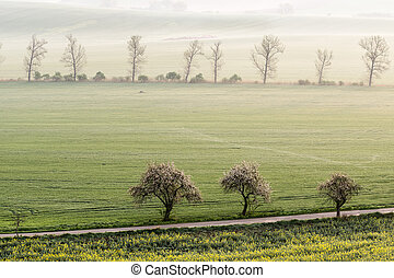 Landscape with flowering trees - Beautiful landscape with...