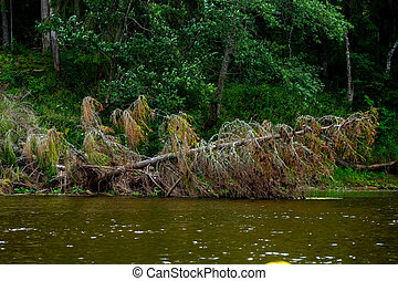Landscape with forest on the river bank. - Forest with a...
