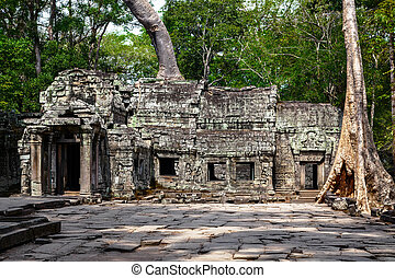 Landscape with giant trees in the temple of Ta Prohm in Cambodia