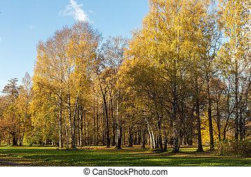 golden foliage in a sunny autumn park
