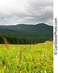 Altai - Landscape with green field and dramatic clouds. ...
