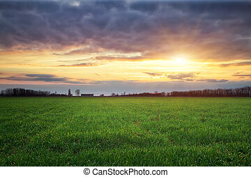 Landscape with green meadow and sun. Sunset. Composition of...