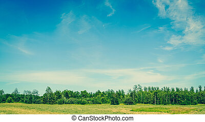 Landscape with green trees and blue sky in the summertime