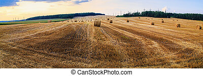 Landscape with hay bales