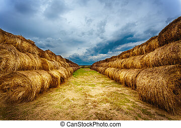 Landscape with hay bales on the field after harvest