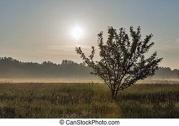 Landscape with haze over Ros river, Ukraine.