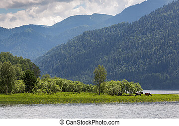 Landscape with hills and horses on the shore of the lake