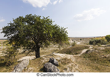 Landscape with lonely tree.
