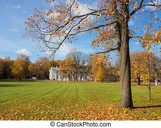 maple in a sunny autumn park