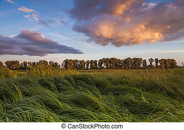 Landscape with marsh overgrown sedge