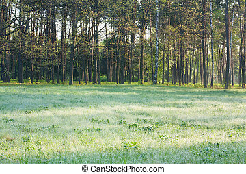 Landscape with meadow in dew and trees. spring nature