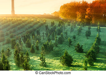 Landscape with morning fog and sunbeams